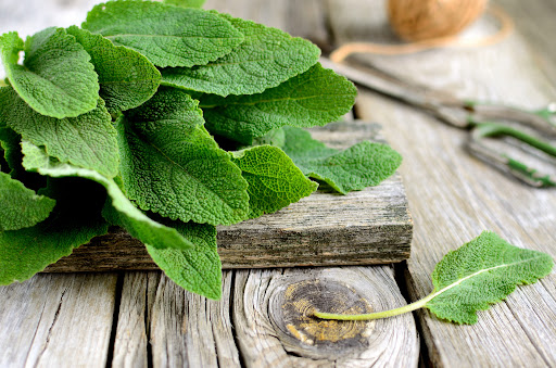 Salvia: Tipos y propiedades
